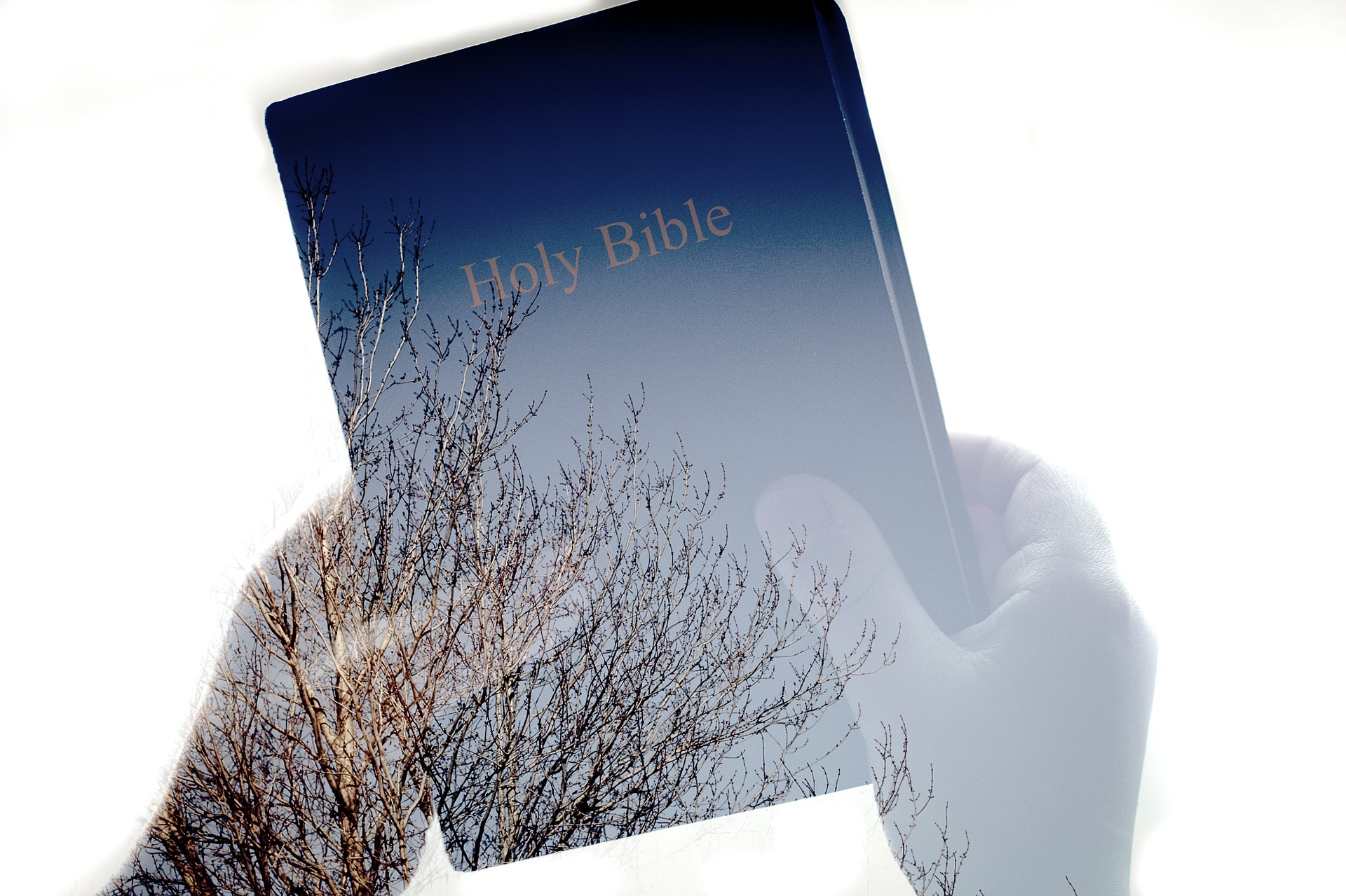 The Purpose of the Scriptures